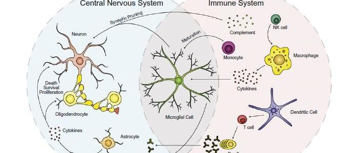 Autismus, ADHS, Hirnentzündung und Autoimmunität