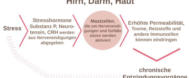 Stress als Auslöser für Autismus, ADHS und Neurodermitis