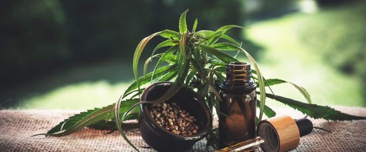 Gastartikel CBD-Öl: Allgemeine Informationen, Wirkungsweise & Anwendungsgebiete